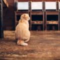 【福岡市】動物とふれ合える癒しの人気動物カフェ10選